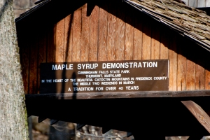 Maple Syrup Demo
